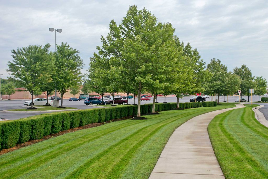 Commercial Landscape Management at Rutherford Crossing Shopping Center in Winchester, VA