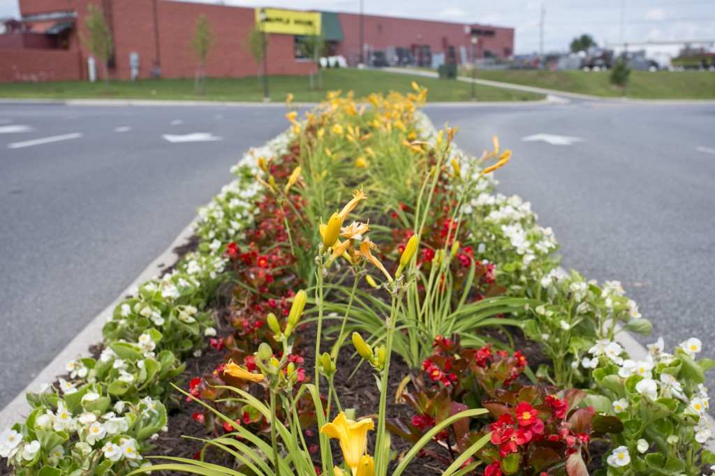 Commercial Landscape Management in Winchester, VA