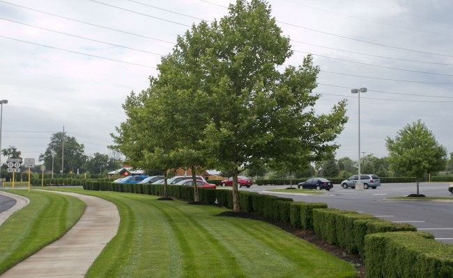 Retail Center Lawn Mowing Service in Winchester, VA