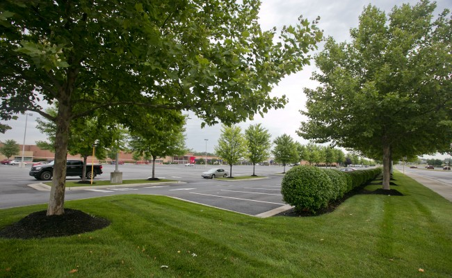 Retail Center Lawn Treatment in Winchester, VA