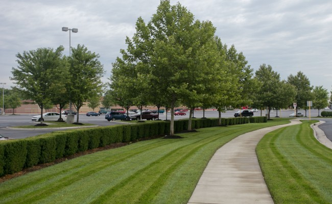 Retail Center Landscape Maintenance in Winchester, VA