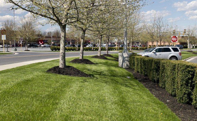Retail Center Landscape Management in Winchester, VA